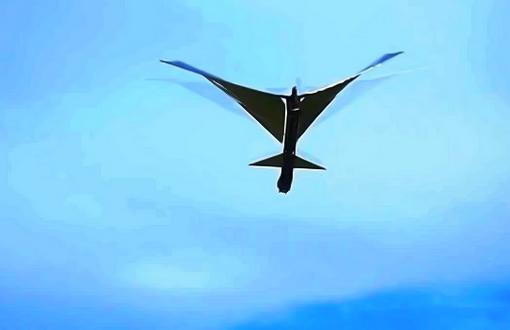 Robo Raven